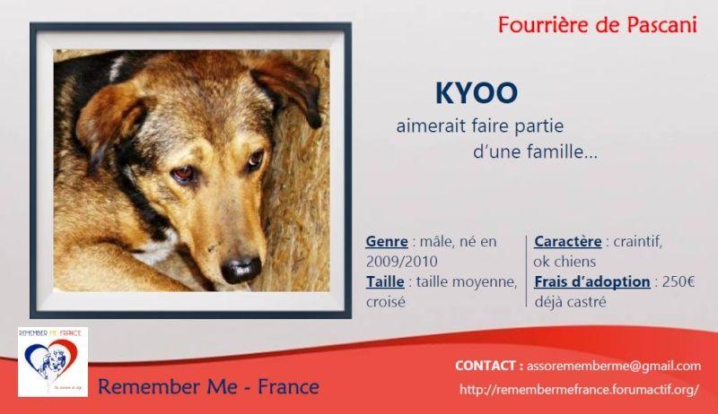 KYOO - 4 ANS DE BOX - mâle croisé de taille moyenne, né environ mai 2009 - REMEMBER ME LAND  , Adopté par Isabelle (Belgique) Visuel35