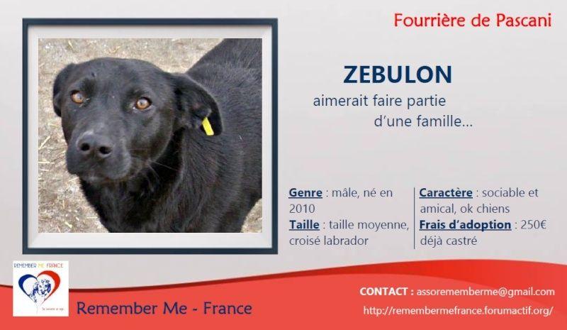 ZEBULON - mâle, croisé labrador (PASCANI) - chez Chantal(depart63) - ADOPTE PAR PATRICK (63) Visuel38
