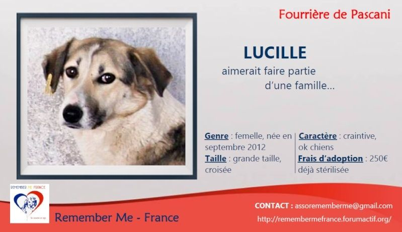 LUCILLE - femelle croisée de taille moyenne, née en 2012 - ( PASCANI )  - réservée adoption par ladyly (22) - décédée Visuel67