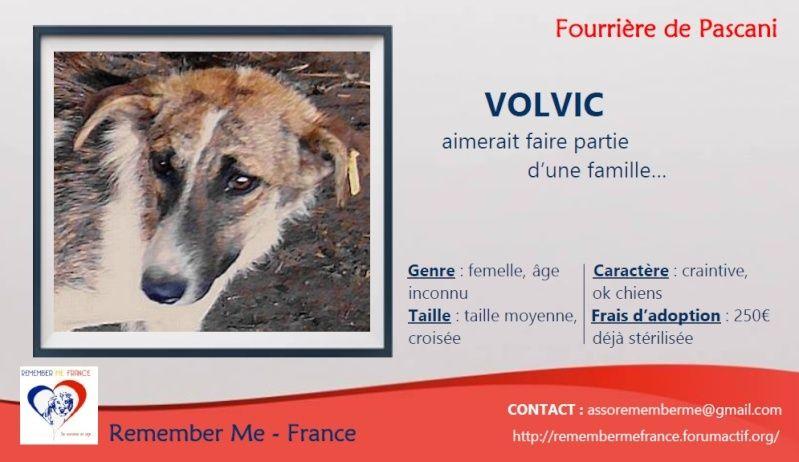 VOLVIC - VOLVIC - Femelle croisée lévrier, taille moyenne née env 2013 (PASCANI) - adoptée par Marie (dpt51) Visuel78