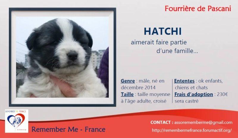 HATCHI, chiot mâle croisé né en 2015 (Pascani) - en pension chez Lucian - adopté par Nathalie (dpt68) Visuel91