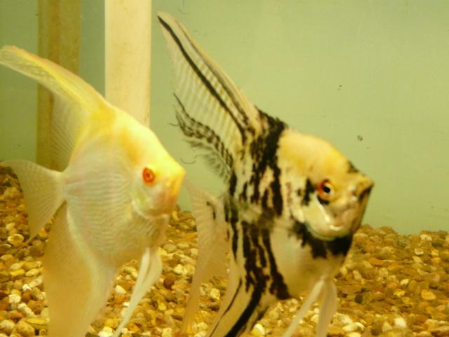 Breeding program Pics P1060212