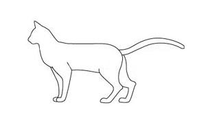 Есть мнение. Тип кошки по телосложению Foreig10