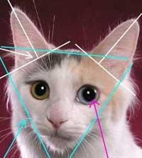 Есть мнение: Форма головы у кошек. Japbob10