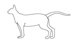 Есть мнение. Тип кошки по телосложению Orient10