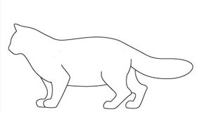 Есть мнение. Тип кошки по телосложению Substa11