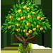 Vous cherchez un arbre ? Venez cliquer ici !!! Aprico11