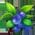 Habitat Pour Perruche => Pochoir Perruche Bluebe12