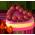 Cerisier / Cerisier Pastel Cherry19