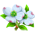 Cornouiller à Fleurs Dogwoo11