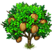 Vous cherchez un arbre ? Venez cliquer ici !!! Durian17