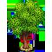 Vous cherchez un arbre ? Venez cliquer ici !!! Koala314