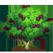 Vous cherchez un arbre ? Venez cliquer ici !!! Mulber19