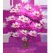 Vous cherchez un arbre ? Venez cliquer ici !!! Pinkma13