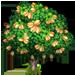 Vous cherchez un arbre ? Venez cliquer ici !!! Pistac11
