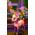Biche Royale => Fourrure de Cerf Rose Prince11