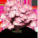 Vous cherchez un arbre ? Venez cliquer ici !!! Sakura13