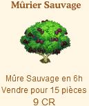 Mûrier Sauvage => Mûre Sauvage Sans_615