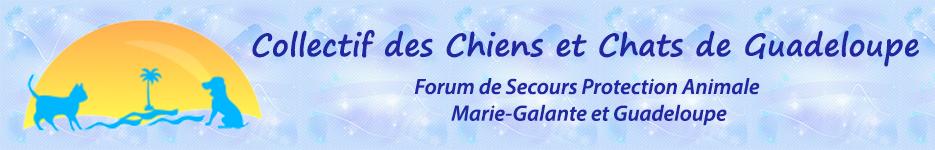 Collectif de Chiens et Chats de Guadeloupe
