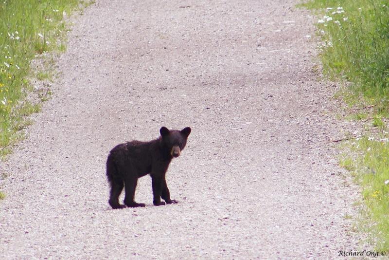 un ourson sur le sentier... Ours_n10