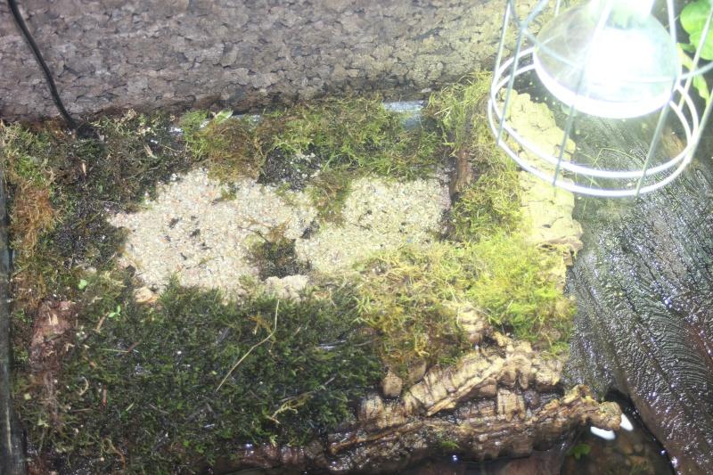 Photos des aqua avec bac de ponte - Page 7 Img_4021