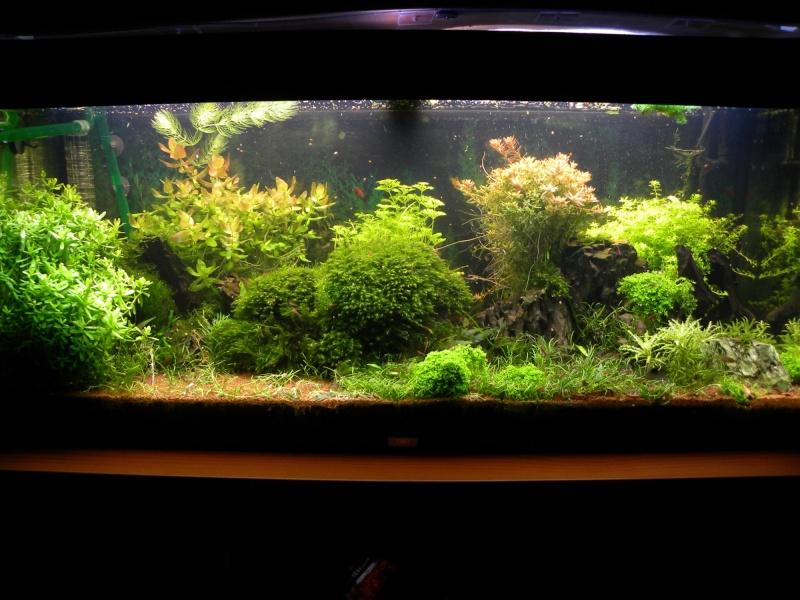 240L communautaire planté et nano 25L, 31L et 60L * 2 - Page 18 Dscn5919