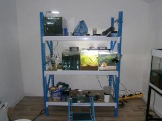 Mes aquariums P2110510