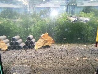 Mes aquariums P2110512