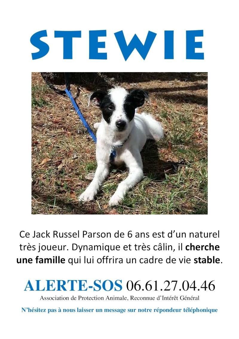 STEWIE cherche une bonne famille // Mâle Parson Jack Russel Terrier (pure race) Stewie10