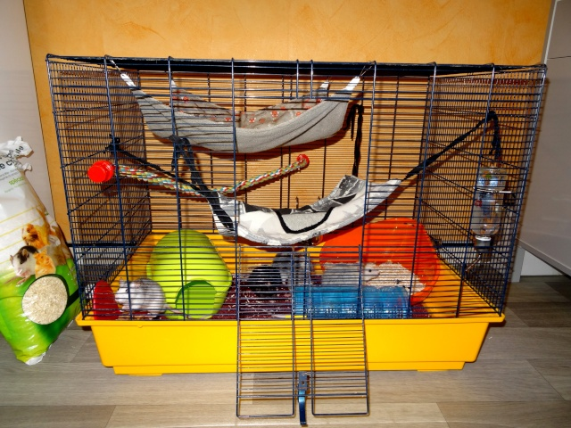 [HELP] FA / Adoptants 5 RATS MALES RENNES (35) - Page 2 Dsc08410