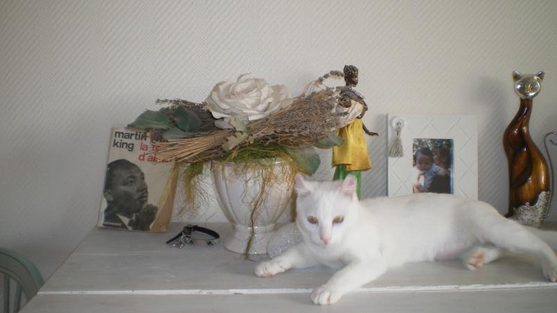 HIRELLE (Hirondelle)  Picasa10
