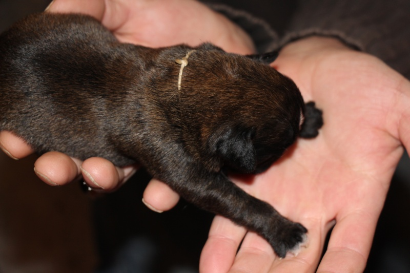 Lola (blanc, Adoptée) Blanc12