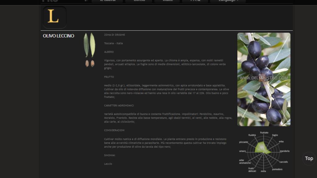 OLIVO parte 2 - Pagina 2 Leccin10