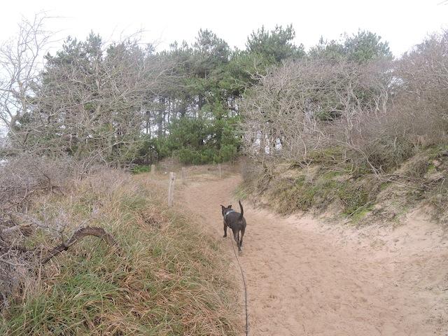 Balades canines en Nord (59)/Pas de Calais (62) - Boulogne-sur-Mer, Calais et Lille - Page 22 Dscn0537