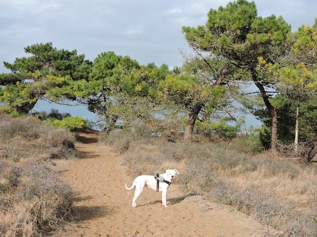 Balades canines en Nord (59)/Pas de Calais (62) - Boulogne-sur-Mer, Calais et Lille - Page 22 Dscn0539