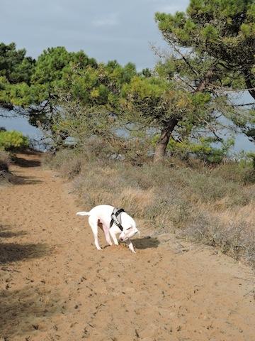 Balades canines en Nord (59)/Pas de Calais (62) - Boulogne-sur-Mer, Calais et Lille - Page 22 Dscn0540