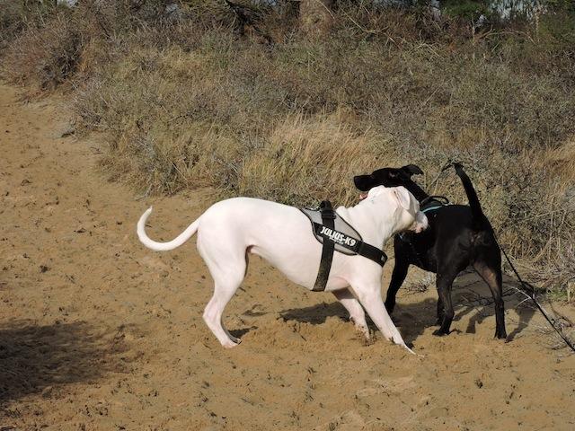 Balades canines en Nord (59)/Pas de Calais (62) - Boulogne-sur-Mer, Calais et Lille - Page 22 Dscn0541