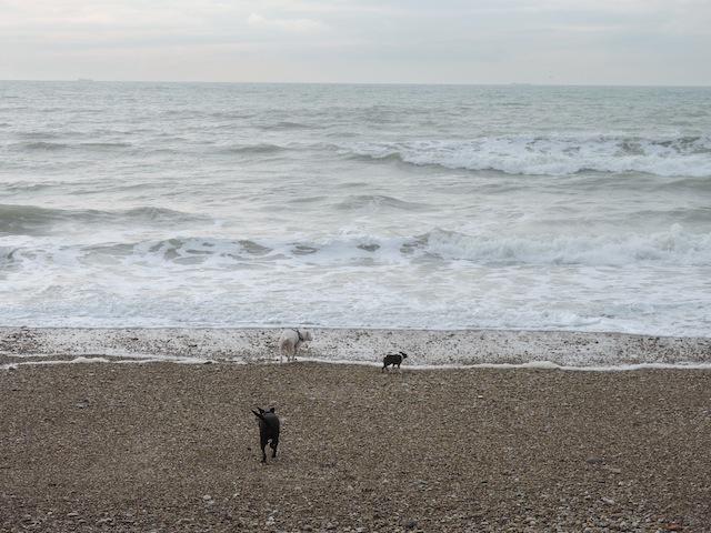 Balades canines en Nord (59)/Pas de Calais (62) - Boulogne-sur-Mer, Calais et Lille - Page 22 Dscn0547