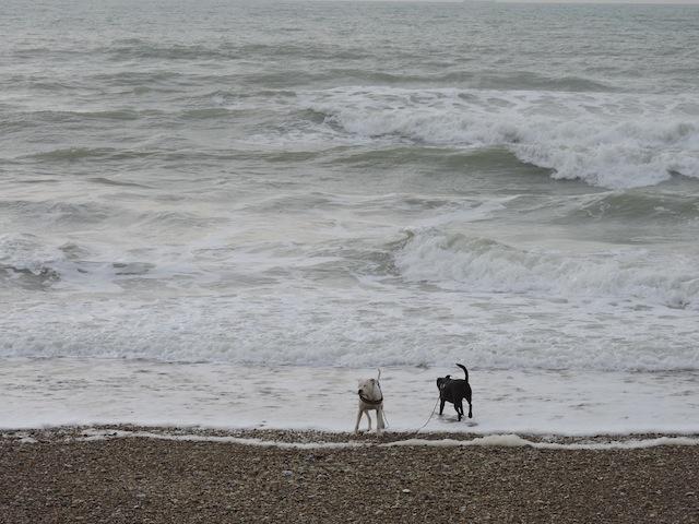 Balades canines en Nord (59)/Pas de Calais (62) - Boulogne-sur-Mer, Calais et Lille - Page 22 Dscn0548