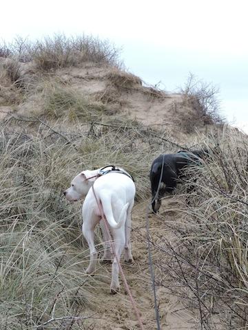 Balades canines en Nord (59)/Pas de Calais (62) - Boulogne-sur-Mer, Calais et Lille - Page 22 Dscn0618