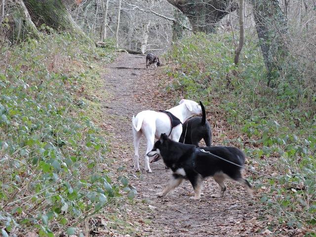 Balades canines en Nord (59)/Pas de Calais (62) - Boulogne-sur-Mer, Calais et Lille - Page 23 Dscn0627