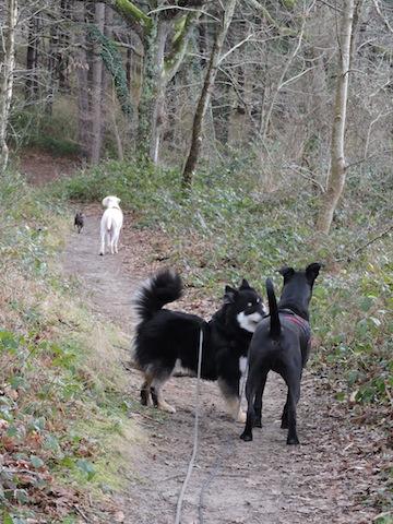 Balades canines en Nord (59)/Pas de Calais (62) - Boulogne-sur-Mer, Calais et Lille - Page 23 Dscn0628