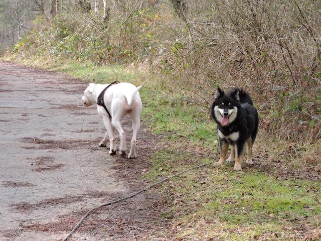 Balades canines en Nord (59)/Pas de Calais (62) - Boulogne-sur-Mer, Calais et Lille - Page 23 Dscn0629