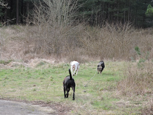 Balades canines en Nord (59)/Pas de Calais (62) - Boulogne-sur-Mer, Calais et Lille - Page 23 Dscn0635