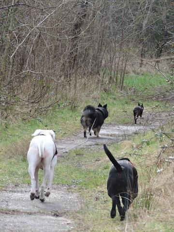 Balades canines en Nord (59)/Pas de Calais (62) - Boulogne-sur-Mer, Calais et Lille - Page 23 Dscn0712