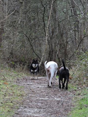 Balades canines en Nord (59)/Pas de Calais (62) - Boulogne-sur-Mer, Calais et Lille - Page 23 Dscn0713