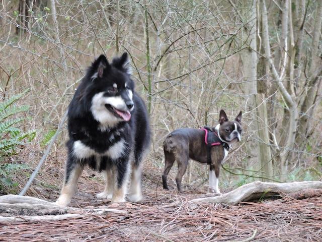 Balades canines en Nord (59)/Pas de Calais (62) - Boulogne-sur-Mer, Calais et Lille - Page 23 Dscn0715