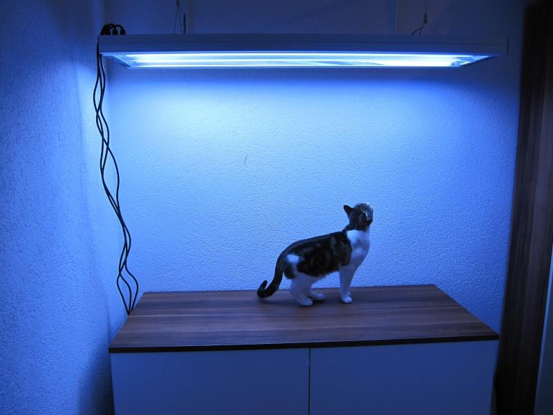 Mon Jaubert 360 litres / BIBI25 Lampe_10
