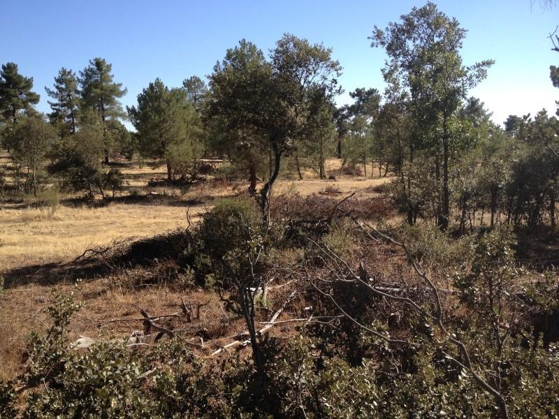 Nuevo campo en Segovia Img_3510