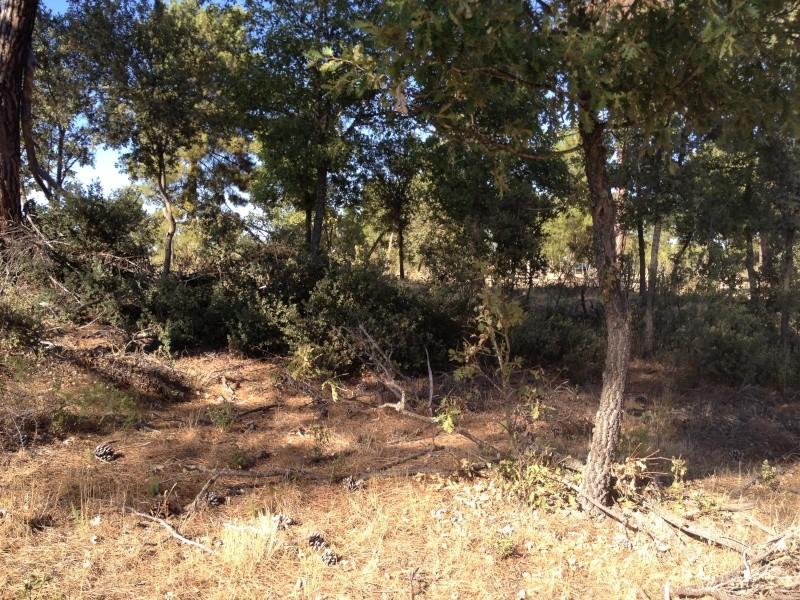 Nuevo campo en Segovia Img_3511